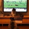 ワイルドライフのキツネ vs ヌクヌクライフの猫