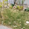 正面の花壇の芝刈りをしてみた