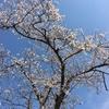 """2018-04-14 つかの間の""""春"""""""