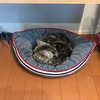 午後半休を取った日。猫とまったり過ごす〜