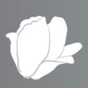 白木蓮の庭