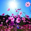 アラフォー女子の婚活奮闘日記