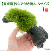 (水草)育成済 リシア付き流木 Sサイズ(約15cm)(無農薬)(1本) 北海道航空便要保温