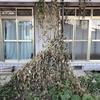 中山モダンハウスで家庭菜園(哀愁の秋と冬・2019/10/22-12/15)
