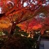 由志園のライトアップとイルミネーション②:島根県松江市