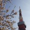 4月10日(水)こんにちは☺『桜と東京タワー②』です♪