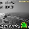 【フカセ釣り】海に浸かりながらチヌを釣った話。地方磯【トオデ】和歌山県みなべ地区鹿島丸渡船