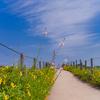 キンシバイの咲く小径:呉羽山公園