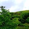 雨に濡れる新緑と小牧山