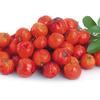 真っ赤な果実のアセロラ