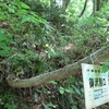 ◆2018/05/12      新緑の温海嶽②…御沢別口~ウガイ場清水