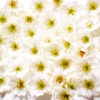 星に願いを、花に祈りを。