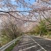闘志踏みしめて門出の桜坂(あ)