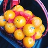 今日の果物 (2018/FEB/13) Today's Fruits