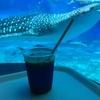 美ら海水族館内のオーシャンブルーはオフシーズンなら予約不要!
