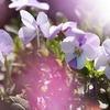 お花のようなヒト
