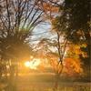 『インナーチャイルドはパワフルな味方』12月18日(水)おはなしの会開催します!