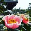京都×枯山水|天龍寺