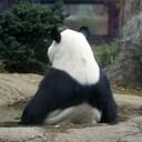 パンダへの憧れ