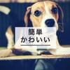 今からでも覚えさせられる【愛犬の芸】