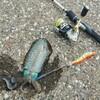 【城ヶ島エギング】初めてのアオリイカはこう釣った!