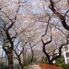 平成最後の皇居のお花見  あの「平成」の額も!