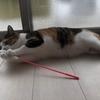 【愛猫日記】毎日アンヌさん#21
