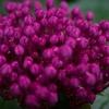 梅雨に合う花