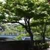 風薫る彦三緑地のツツジさん・・