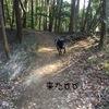 Today's Luke - ラブラドール ルーク 週末の山散歩