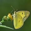 🦋荒川河川敷で昆虫を撮影しました🐛