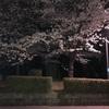 「夜桜見るなら」大阪城公園のライトアップ!夜桜の楽しみ方を紹介!