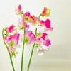 言葉一つで気持ちも変わる!前向きな花言葉を持つ花を紹介します♪