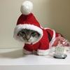クリスマス写真撮影会。クリスマスねこちゃん。