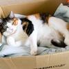 【愛猫日記】毎日アンヌさん#85