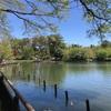 散歩日和 ~ 洗足池 ~