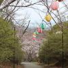 【ぶらり福岡県風景の旅】飯塚市の桜を撮影!&飯塚市で桜が楽しめる場所【3選】