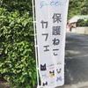 奄美の猫カフェ「gatti」