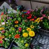 アパートの夏花壇 植え付け完了!