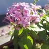ガラケーの頃はスマホカメラで花を撮る日が来るとは思ってなかった