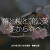827食目「椿と桜と蒲公英 -冬から春へ-」2020年3月21日@福岡・舞鶴公園