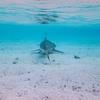 【タヒチ旅行記】(4) モーレア島のティキ・ビレッジと、ラグナリウムでサメと泳ぐ