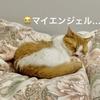 ブログを書きたい飼い主と、癒しの寝顔で眠気を誘う愛猫。