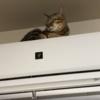 【猫ブログ】猫ちゃんの身体能力とは・・・