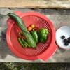 菜園だより ⑩ 今日の収穫その他