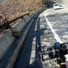 渋峠で野生の猿に遭遇した話。