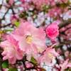 梅、椿、桃、桜、芝桜