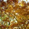【週末耳寄情報】収穫の秋が、ついに来ました!僕は文房具イベント3連発です