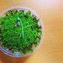 苔生【mossmuss】のブログ