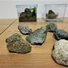 コケリウムを作るために石を集めました。小石ですが、コケリウムの世界では、巨岩です。